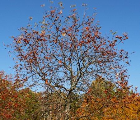 Vissnande träd med blå himmel.